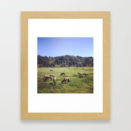 Elk Reserve Framed Art Print
