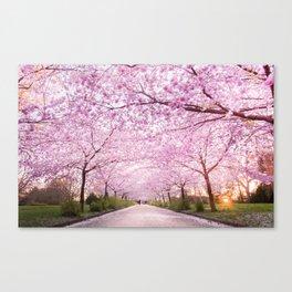 Pink Road Canvas Print