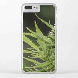 Cannabis 1 Clear iPhone Case
