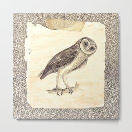 Sooty Owl (Ornothologie Range) Metal Print