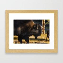 Yellowstone National Park - Bison Framed Art Print