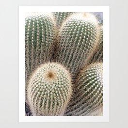 Cactus Photography Golden Desert Delight Plants Nature Botanical Art Art Print