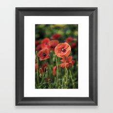 Poppy what else? Framed Art Print