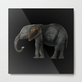 Elephant cute animals elephan Metal Print