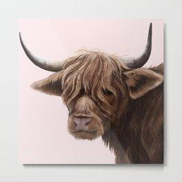 highland cattle portrait Metal Print