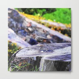 Dancing bird on a stump Metal Print