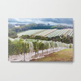 Rows of grape vines protected with bird netting. Beautiful countryside landscape. Metal Print