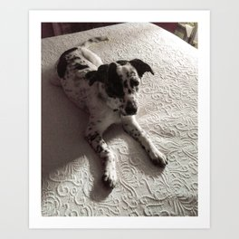 Puppy on Bed Art Print