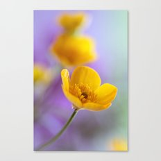 Humble Buttercup Canvas Print