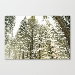 Snow covered Trees in the forest. Lake Tahoe in Winter. USA Canvas Print