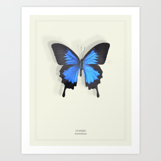 Brilliant Blue Butterfly Art Print