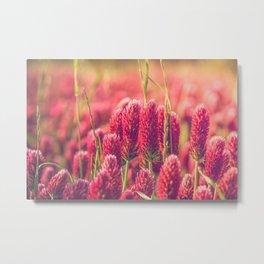 Crimson Clover Metal Print