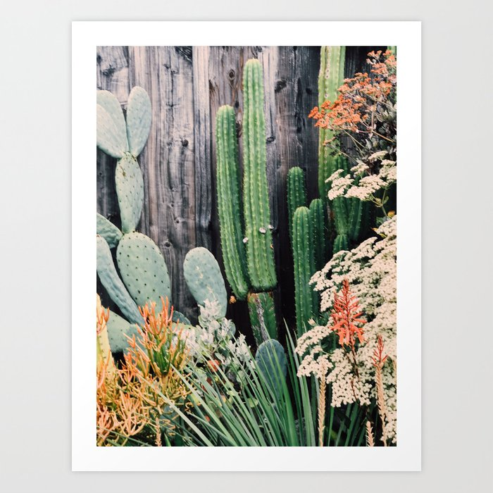 California Cactus Art Print