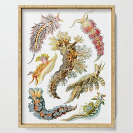 Ernst Haeckel - Nudibranchia (Snails) Serving Tray