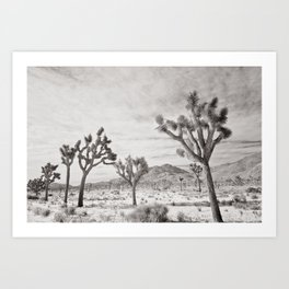 Joshua Tree Park by CREYES Art Print