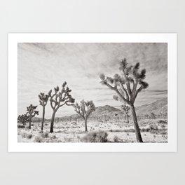 Joshua Tree Park by CREYES Art Print