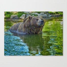 Brown bear in water Canvas Print