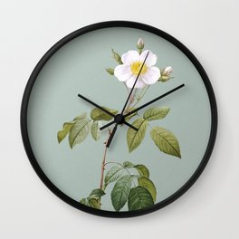 Vintage Big Leaved Climbing Rose Botanical Illustration on Mint Green Wall Clock