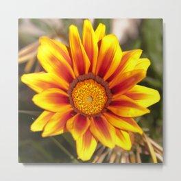 Southern African ❁ Yellow Gazania Flower  Metal Print