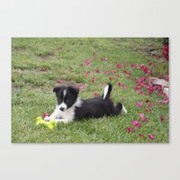 border collie Canvas Prints featuring Border Collie by Kimberly Mungia