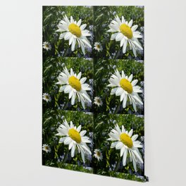 Close Up Common White Daisy With Garden Wallpaper