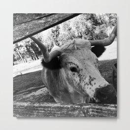 Alabama cattle Metal Print