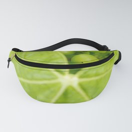 Maturing wine grapes Fanny Pack