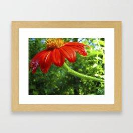Flower Dew Framed Art Print