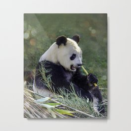 Panda breakfast Metal Print