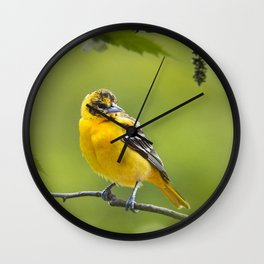 Baltimore Oriole Bird Wall Clock