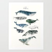watercolour Art Prints featuring Whales by Amy Hamilton