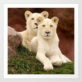 White Lion & Lioness Cubs Art Print