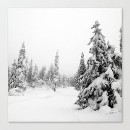 Winter Scape 1 Canvas Print