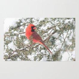 Cardinal on a Snowy Cedar Branch (sq) Rug