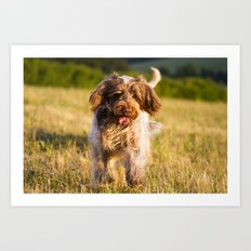 Brown Roan Italian Spinone Dog in Action Art Print