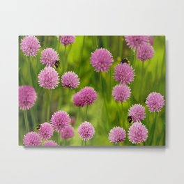 Bumble Bees on Pink Chives Metal Print