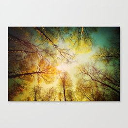 Rest in the forest Canvas Print