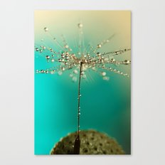 One seed Canvas Print