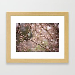 Ornamental Cherry Tree Framed Art Print