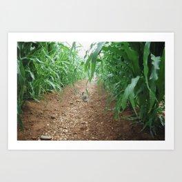 Kitten in the cornstalks Art Print