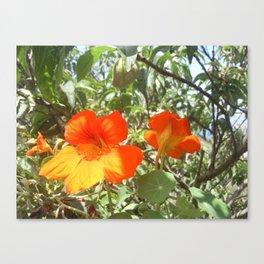 Loving Flowers Canvas Print