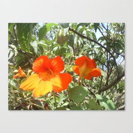 Loving Flowers Canvas Print
