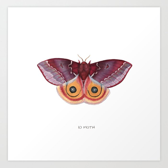 Io Moth Kunstdrucke