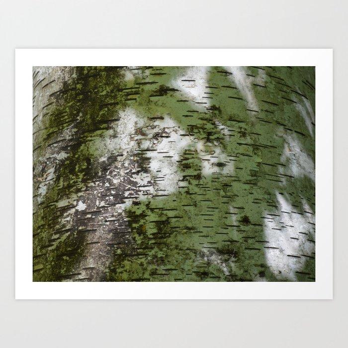 Birch Bark Pattern Green and White Wood Pattern Bring the Outdoors In Kunstdrucke
