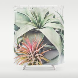 Air Plant Collection III Shower Curtain