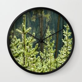 Young Lodgepole Pines after a rain Wall Clock