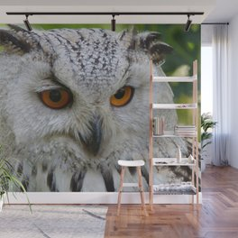 Owl | Chouette Wall Mural