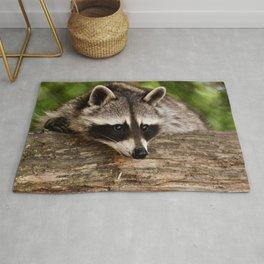Adorable Raccoon Photo Rug