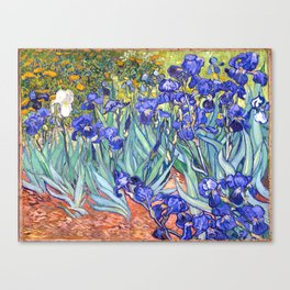 Vincent Van Gogh Irises Canvas Print