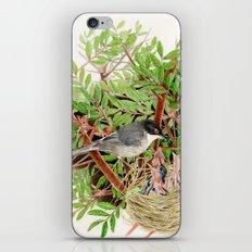 Sardinian Warbler - nesting bird on the Ligurian coast iPhone & iPod Skin